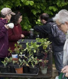 Bourse d'échange gratuite de plantes et graines Fête de la Transition Braine-l'Alleud