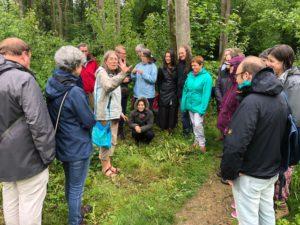 Balade plantes sauvages herboristes La Canopée Fête de la Transition Braine l'Alleud